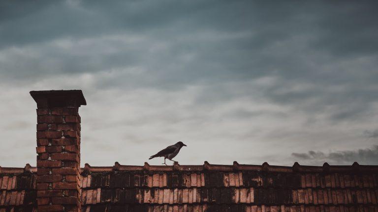 kruk na dachu